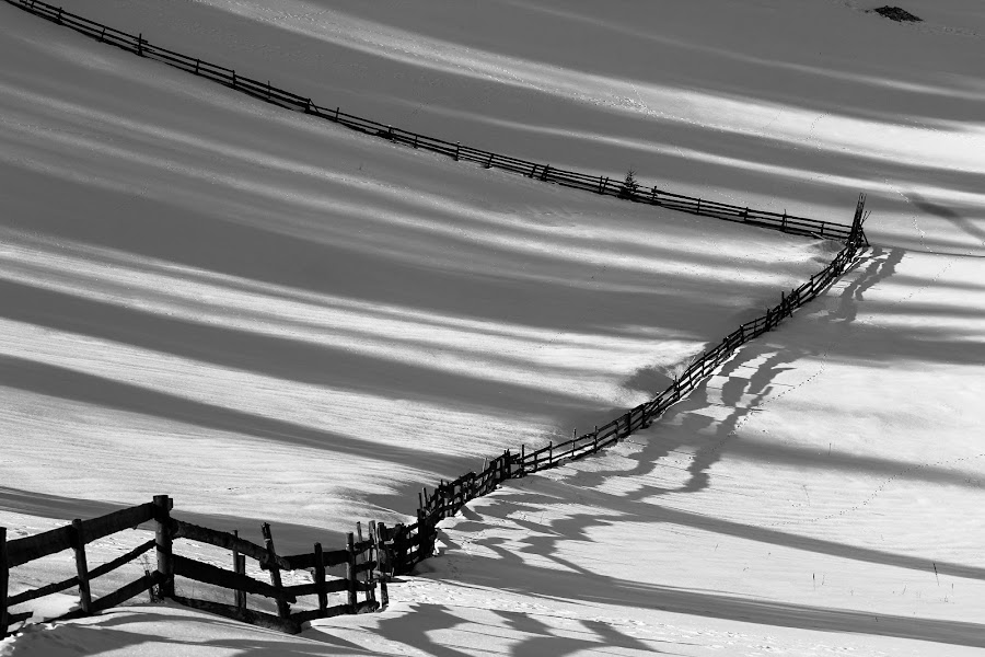 lines by Cristi Rus - Black & White Landscapes ( fence, black and white, lines, shapes )