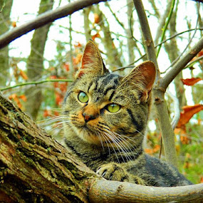 Watching  by James Cole - Animals - Cats Portraits