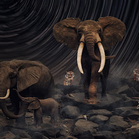 Trap by Karazy Shooke - Digital Art Animals ( wild, tiger, elephant, digital art, animal )
