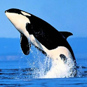Killer Whale Slideshow logo