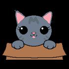 Cat in Box icon