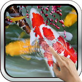 Interactive Koi Fish 3D