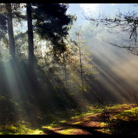 morning as broken by David Walker - Nature Up Close Trees & Bushes ( light )