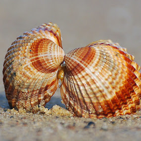 by Ivan Marjanovic - Nature Up Close Other Natural Objects (  )
