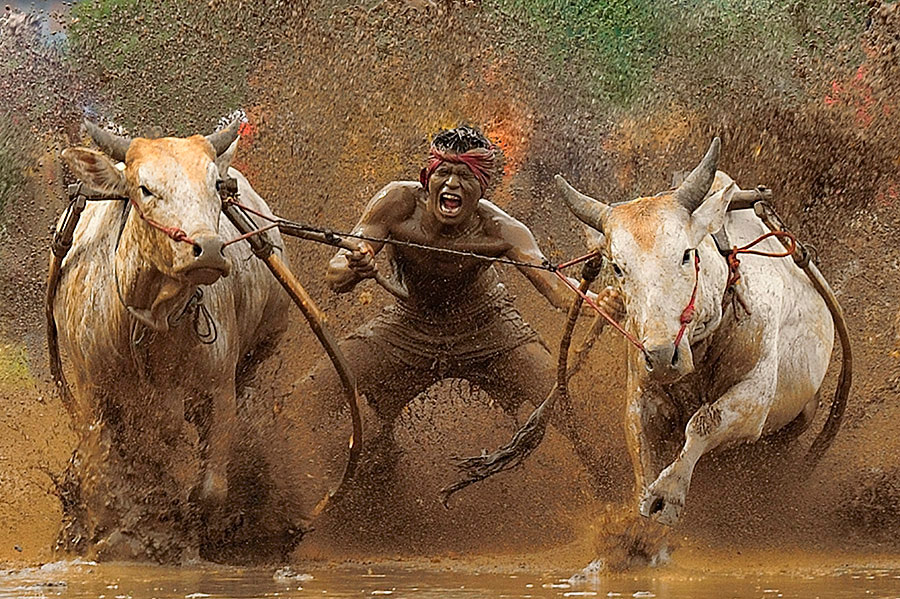 the race by Dadan Ramdani - Sports & Fitness Rodeo/Bull Riding ( , color, colors, landscape, portrait, object, filter forge, Emotion, human, people, Travel, People, Lifestyle, Culture )