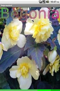 Garden Flowers- screenshot thumbnail