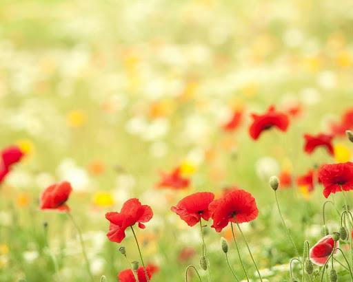 五顏六色的鮮花壁紙