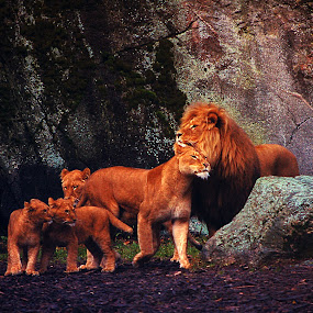 Family by Kajsa Karlsson - Animals Lions, Tigers & Big Cats ( love, hug, zoo, family, rock, cubs, lions, colorful, mood factory, vibrant, happiness, January, moods, emotions, inspiration )