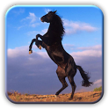 Amazing Horses Pictures icon