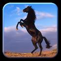 Amazing Horses Pictures icon