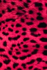 wild animal print wallpaper - photo #17