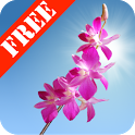 Orchids Free Live Wallpaper icon