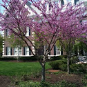 Violet Tree at TCNJ