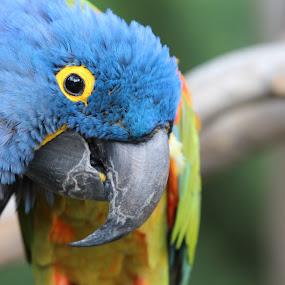 by Lore Hall - Animals Birds