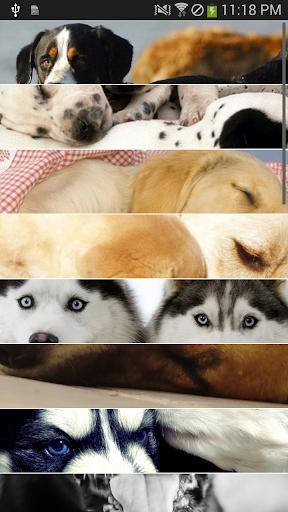 【無料】犬の壁紙・写真集 vol.5