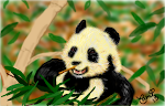 Panda lunching on bamboo