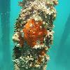 Red sea sponge