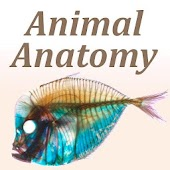 Animal Anatomy Glossary