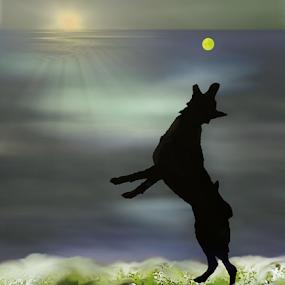 Dog's Beach Ball by Robin Amaral - Uncategorized All Uncategorized ( artograph, belgian malinois, waterscape, waves, sunset, silhouette, dog playing, ocean, beach, tennis ball,  )