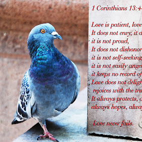 LOVE IS by Nancy Lowrie - Typography Quotes & Sentences ( love, bird, valentines, quote, bible verse,  )