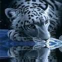 White Tiger Lick Azure Water logo