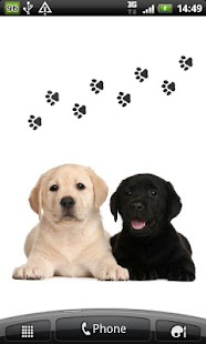 Labrador puppies wallpaper - screenshot thumbnail