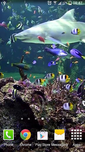 【免費個人化App】水族館動態桌布-APP點子