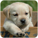 Dogs Wallpaper icon