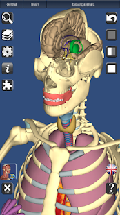 3D Anatomy Lite - screenshot thumbnail