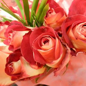 Salmon Roses by Kathy Rose Willis - Flowers Flower Arangements ( rose, bouquet, aesthetic, roses, salmon roses, salmon-colored, , Flowers, Flower Arrangements )