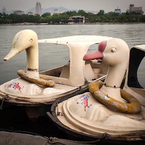 Birds of Jinan by Steve Hall - City,  Street & Park  City Parks ( jinan, china )