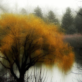 Misty by Dawn Marie - Nature Up Close Trees & Bushes ( water, haze, lagoon, nature, autumn, fog, trees, nikon, pond, mist,  )