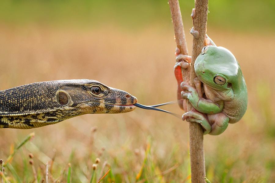 target by Hendy Mp - Animals Amphibians