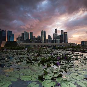 sunset sky over CBD by Sherry Zhao - City,  Street & Park  City Parks ( ponds, cbd, sky, sunset, cityscape, singapore )