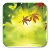 Fallen Leaves Ripple LWP