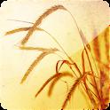 3D Wheat Fields (PRO) logo