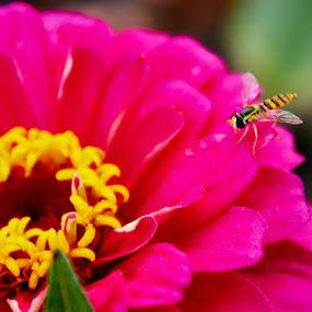 Flower by Mahdi Shiasi - Flowers Single Flower