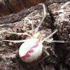 Cobweb Weaver