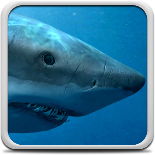 Sharks Live Wallpaper Icon