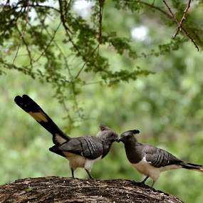 Love at first sight  by Janet Rose - Novices Only Wildlife
