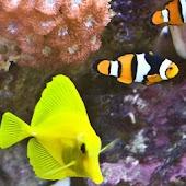 Aquarium Fish Puzzles