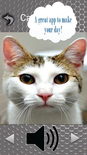 解謎必備APP下載|Cute Cat Sounds 好玩app不花錢|綠色工廠好玩App