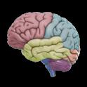 3D Brain icon