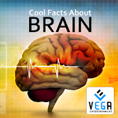 Cool Facts about Brain