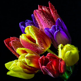 Rainbow Rising by Martin Crush - Flowers Flower Arangements ( crush photography, colour, bouquet, crush studio, petals, tulip, tulips )