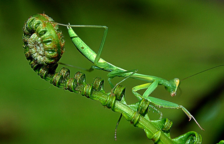 Merayap by Akhmat Haridi - Animals Insects & Spiders