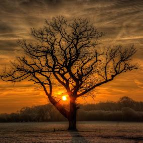 Frosty Sunrise by G. Stetson - Landscapes Sunsets & Sunrises ( views, sunset, earth, sunrise, landscapes, light, golden hour,  )