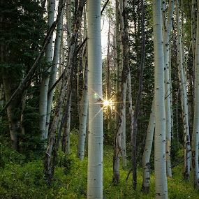 Morning Sun in State Forest State Park by David Andrus - Landscapes Forests ( sunburst, state forest state park, northern colorado, colorado, aspens )