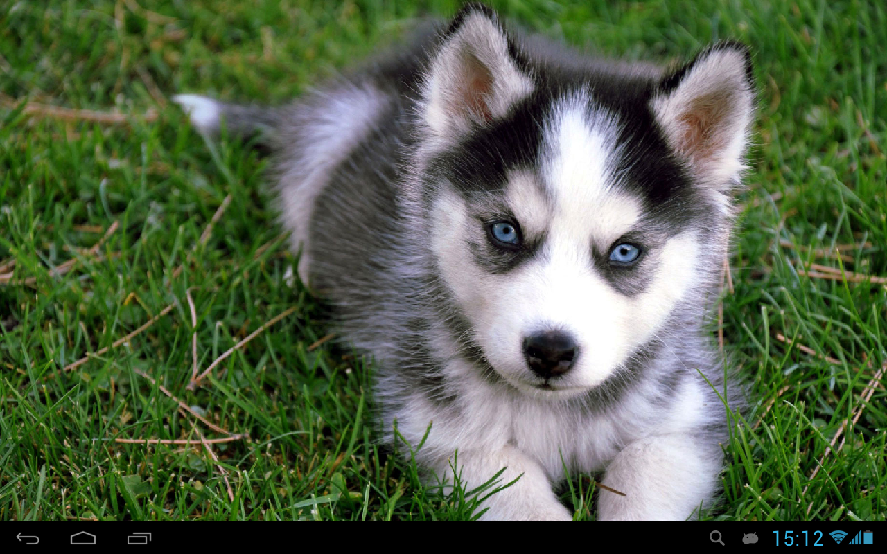 Puppies Dogs Live Wallpaper Android Apps On Google Play