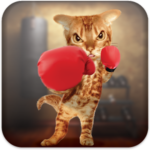 Boxing Cat Icon